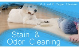 Pet Stain and Odor Removal - Dumbo 11201